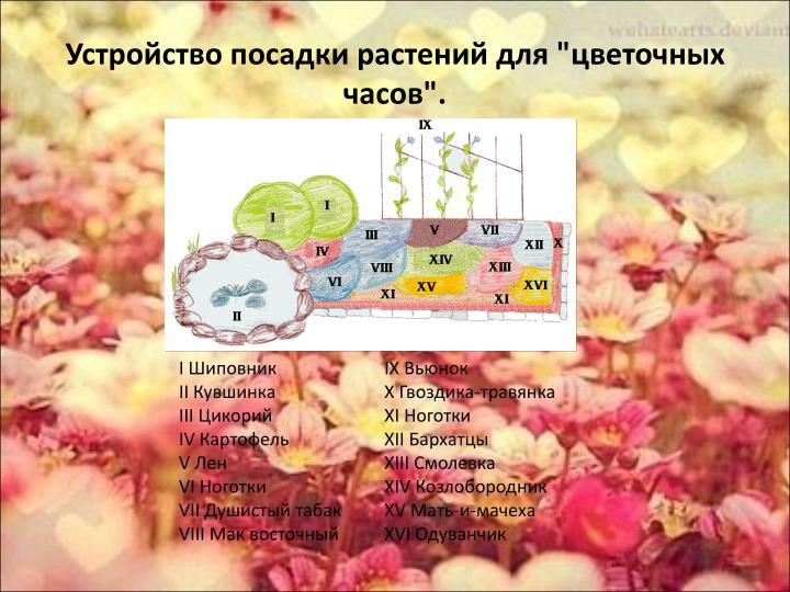 """Устройство посадки растений для """"цветочных часов""""."""
