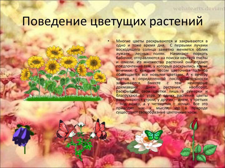 Поведение цветущих растений
