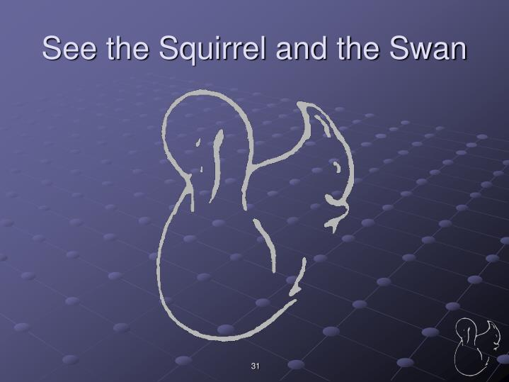 See the Squirrel and the Swan