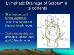 lymphatic drainage of scrotum its contents