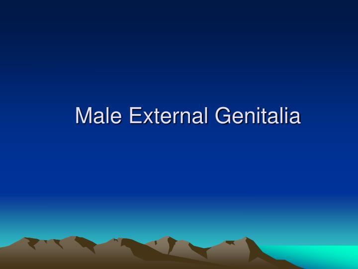 Male External Genitalia