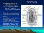 scrotum2