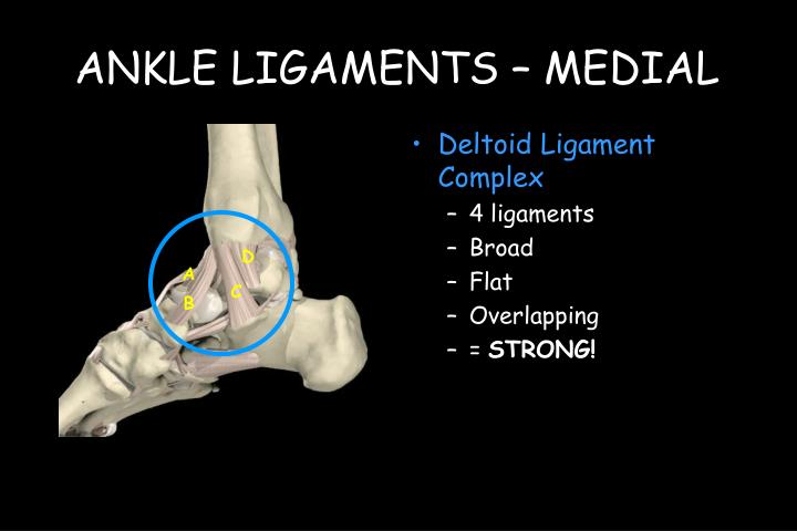 Ankle ligaments medial