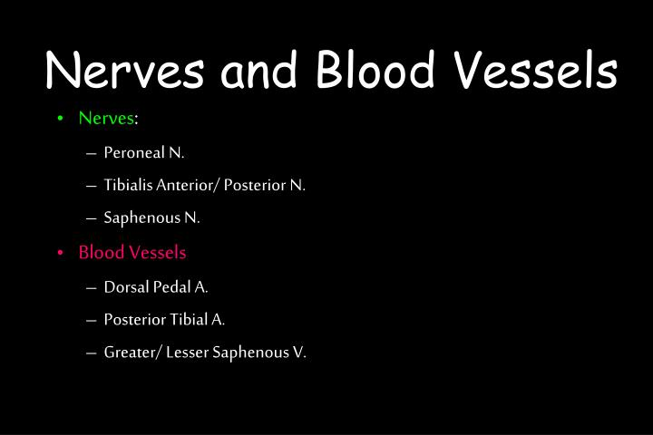 Nerves and Blood Vessels