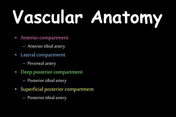 Vascular Anatomy