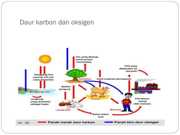 Daur karbon dan oksigen