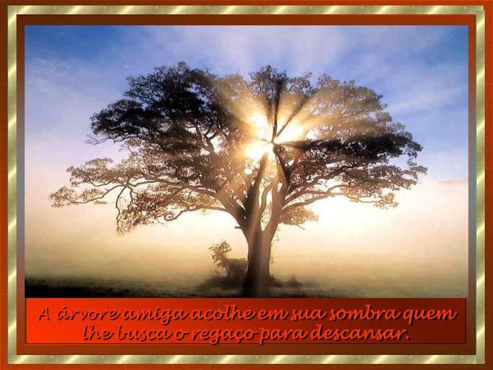 A árvore amiga acolhe em sua sombra quem lhe busca o regaço para descansar.