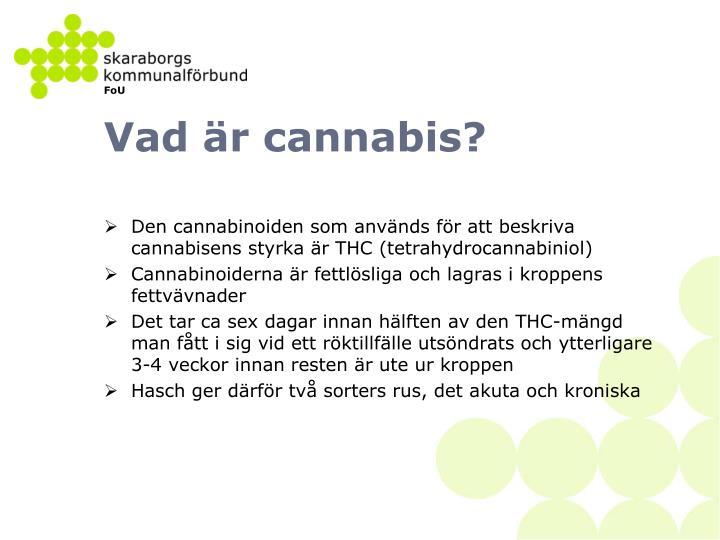 Vad är cannabis?