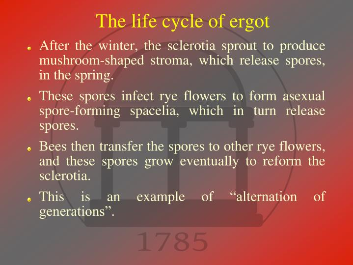 The life cycle of ergot