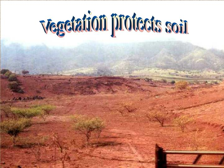 Vegetation protects soil