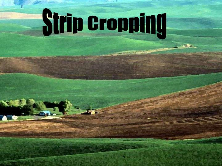 Strip Cropping