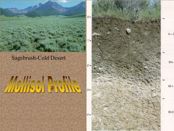 Sagebrush-Cold Desert
