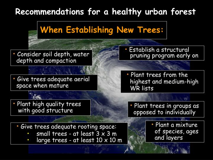 Recommendations for a healthy urban forest