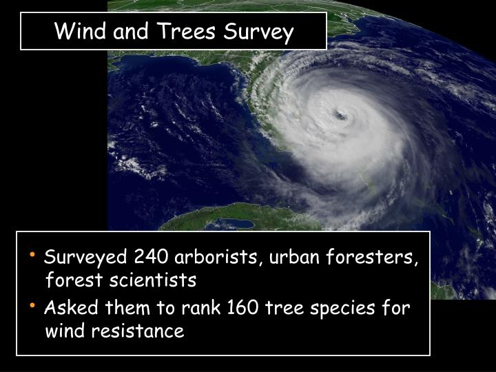 Wind and Trees Survey