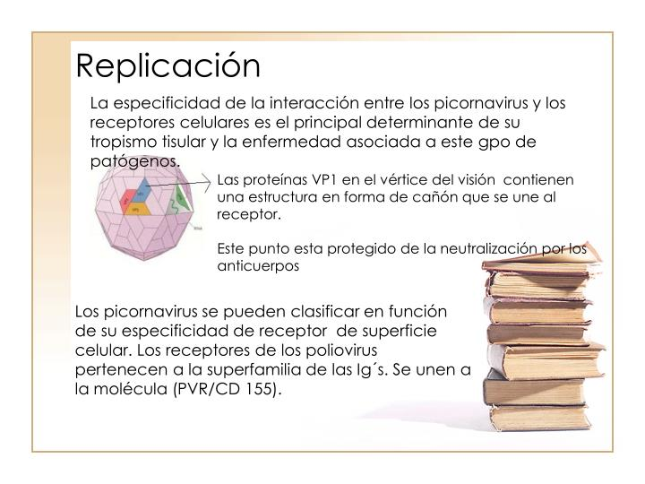 Replicacin