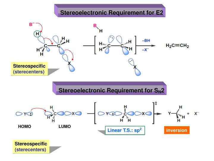 Stereoelectronic Requirement for E2
