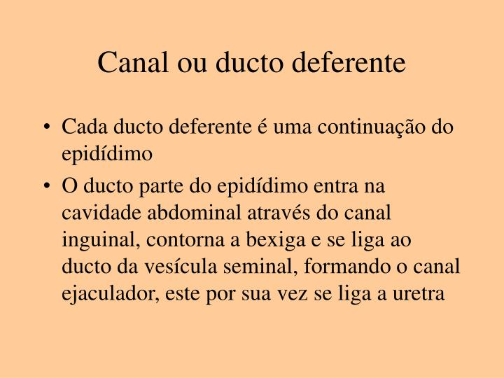 Canal ou ducto deferente