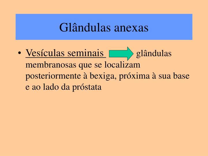 Glândulas anexas