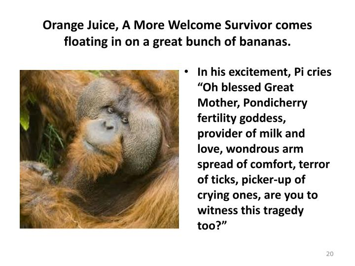 Orange Juice, A More Welcome Survivor comes floating in on a great bunch of bananas.