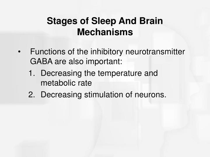 Stages of Sleep And Brain Mechanisms