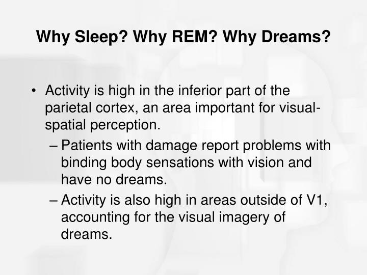 Why Sleep? Why REM? Why Dreams?