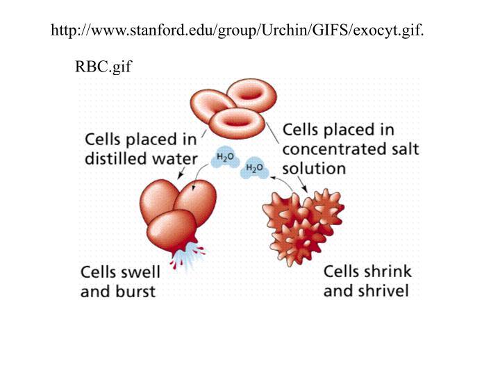 http://www.stanford.edu/group/Urchin/GIFS/exocyt.gif.