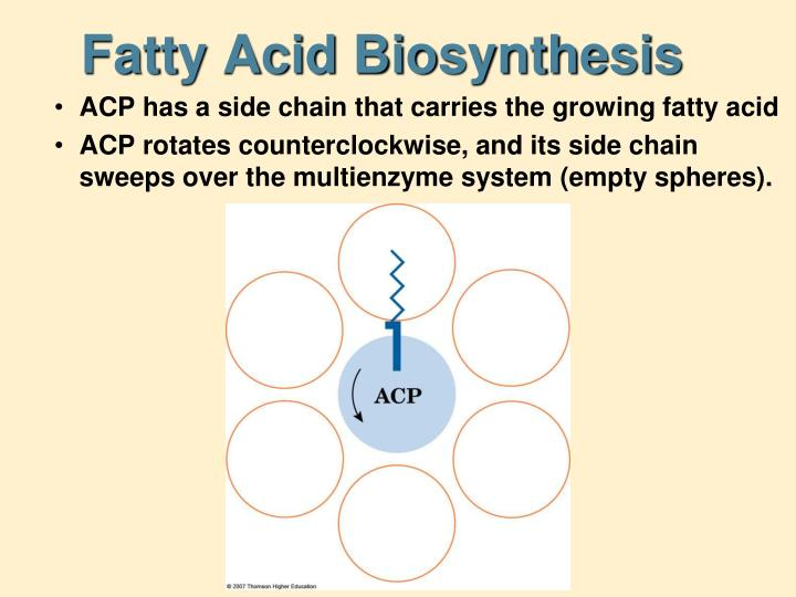 Fatty Acid Biosynthesis