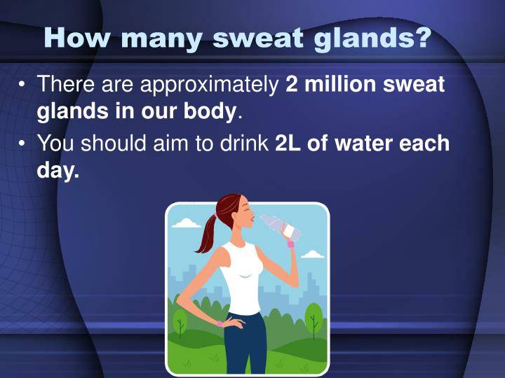 How many sweat glands?