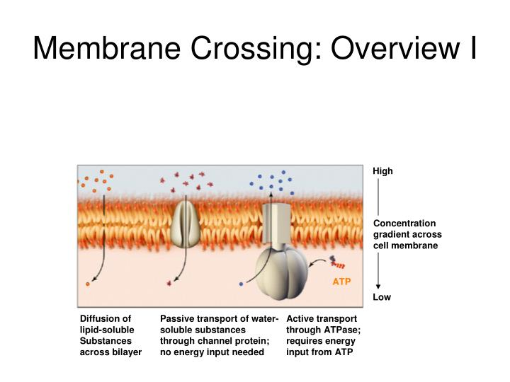 Membrane Crossing: Overview I