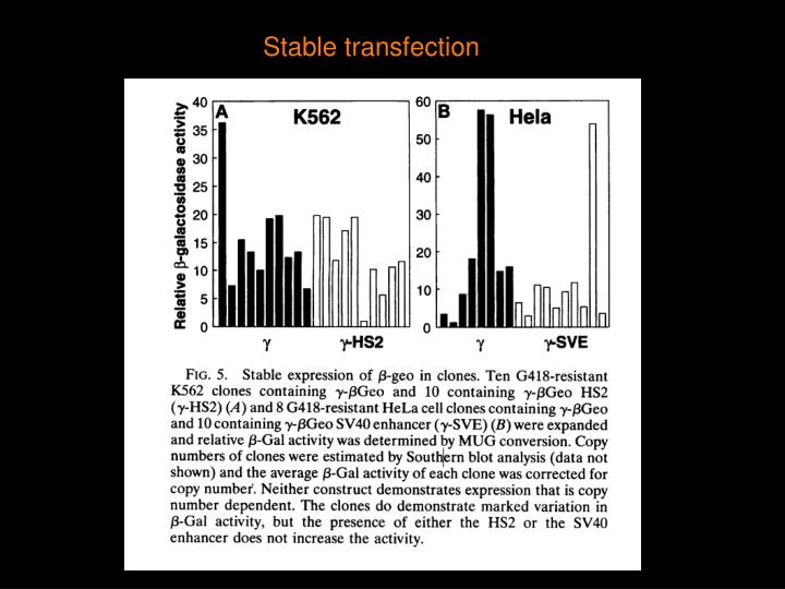 Stable transfection