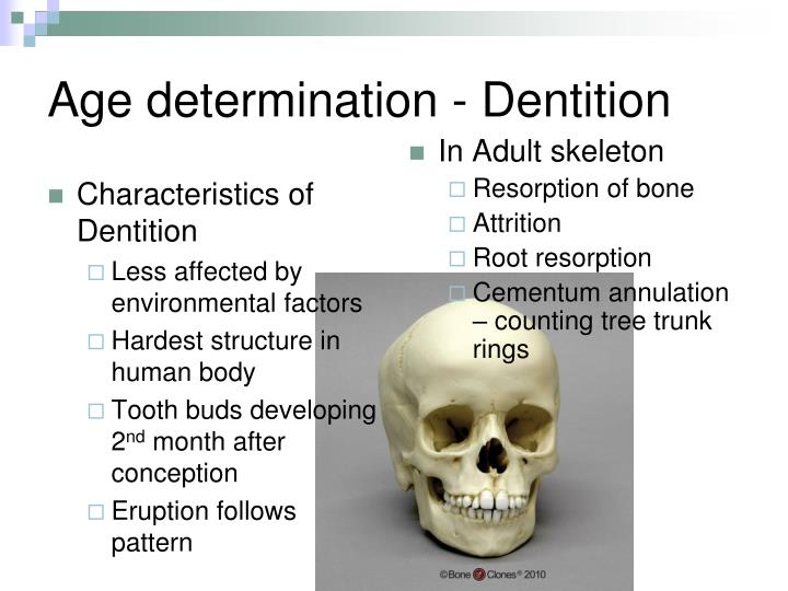 Characteristics of Dentition