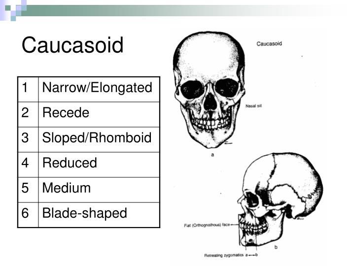 Caucasoid