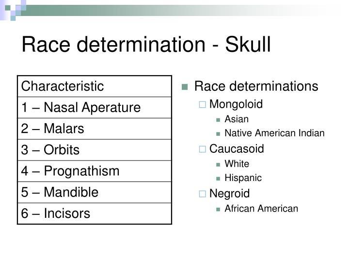 Race determination - Skull