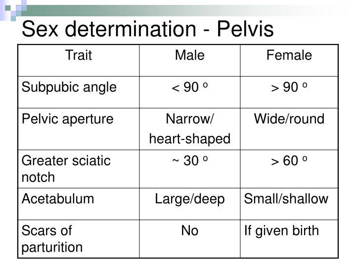 Sex determination - Pelvis