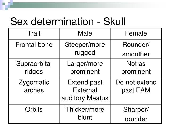 Sex determination - Skull