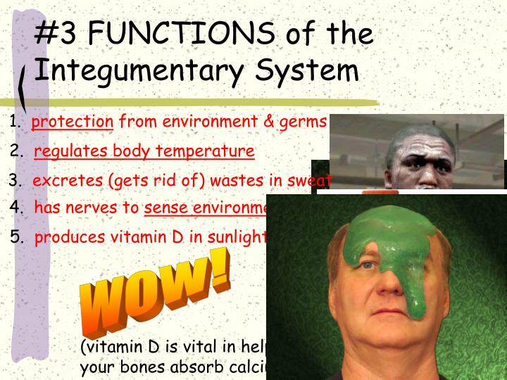 #3 FUNCTIONS of the Integumentary System