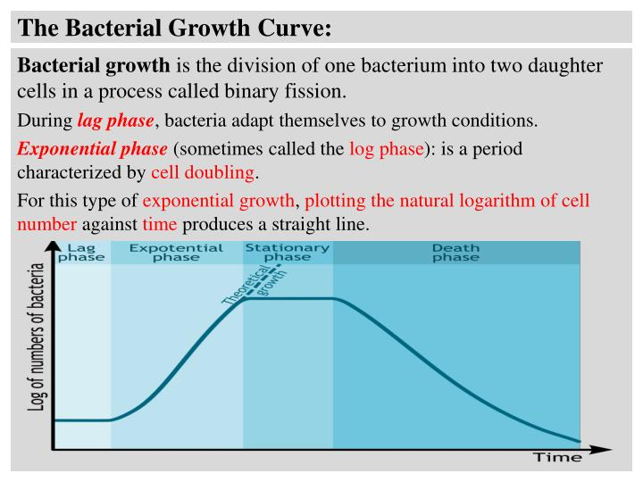 The Bacterial Growth Curve: