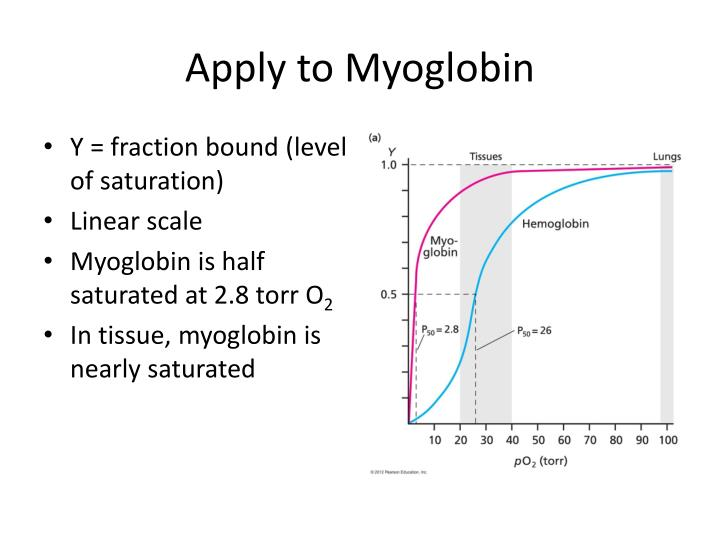 Apply to Myoglobin