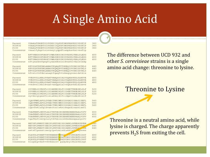 A Single Amino Acid