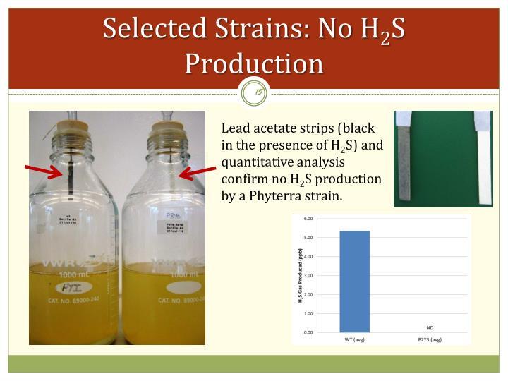 Selected Strains: No H