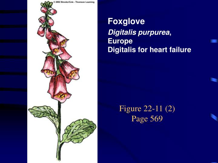 Figure 22-11 (2)