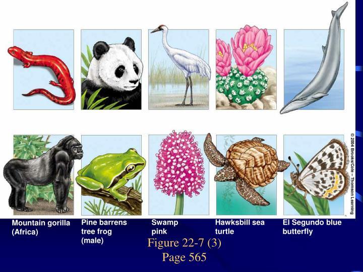 Figure 22-7 (3)