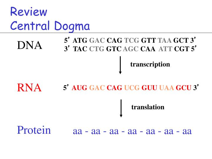 Review central dogma
