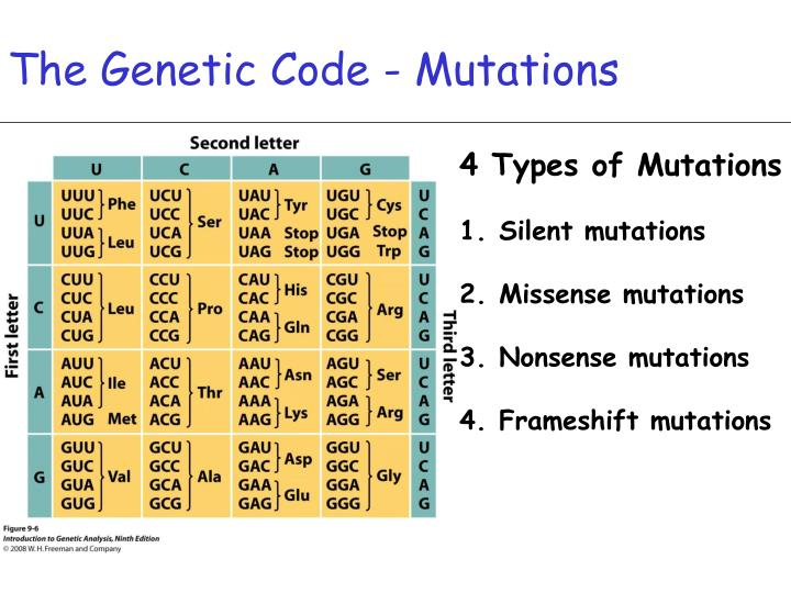 The Genetic Code - Mutations