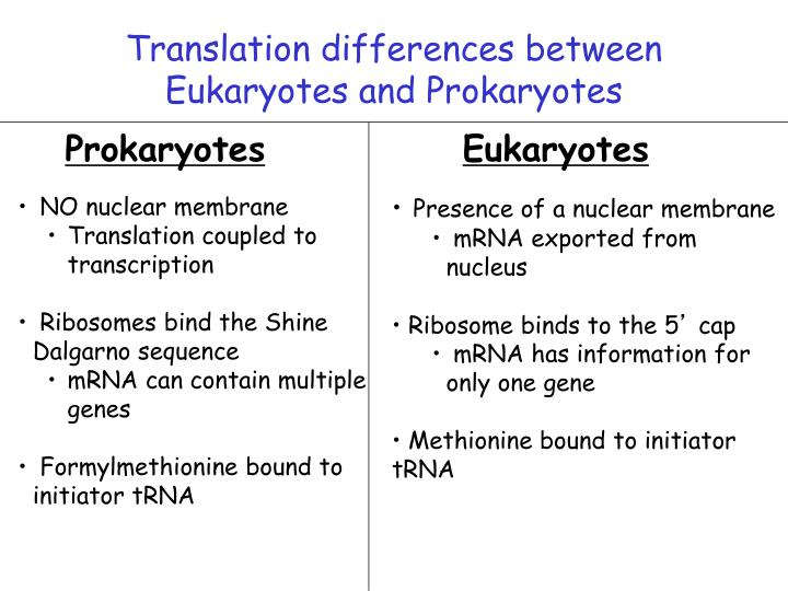 Translation differences between
