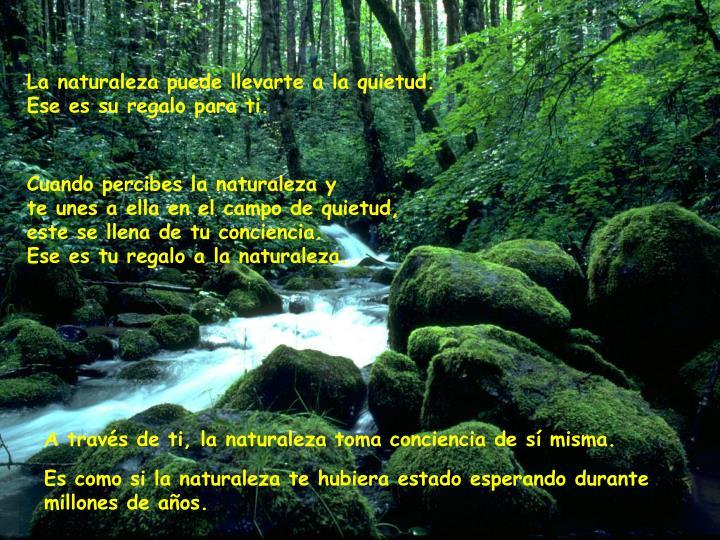 La naturaleza puede llevarte a la quietud.