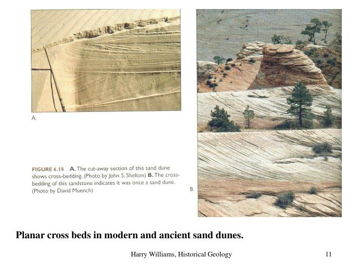 Planar cross beds in modern and ancient sand dunes.