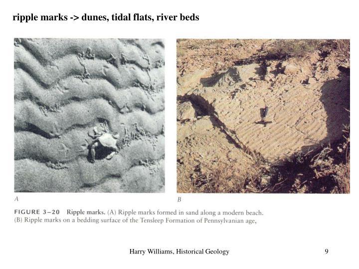 ripple marks -> dunes, tidal flats, river beds