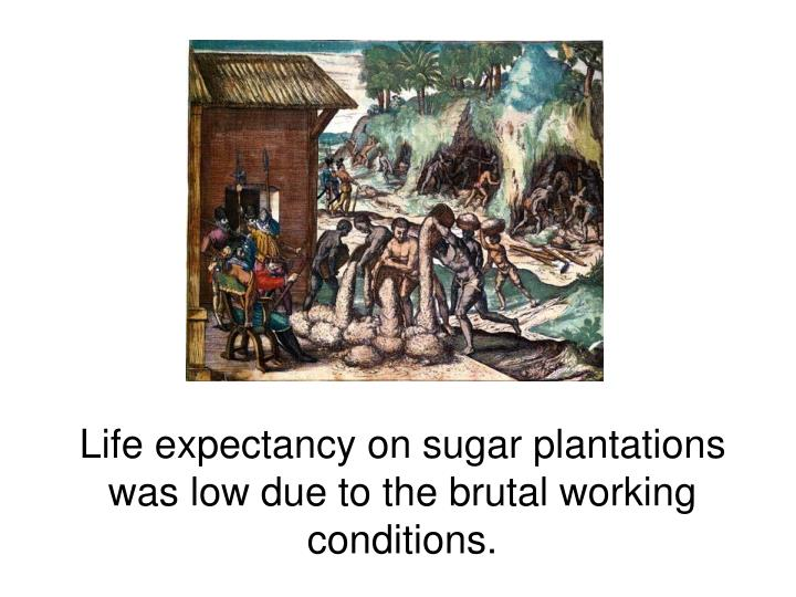 Life expectancy on sugar plantations