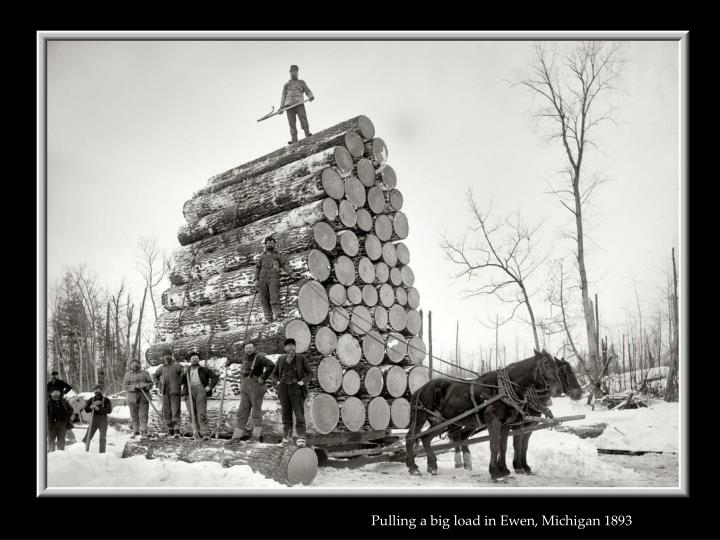 Pulling a big load in Ewen, Michigan 1893